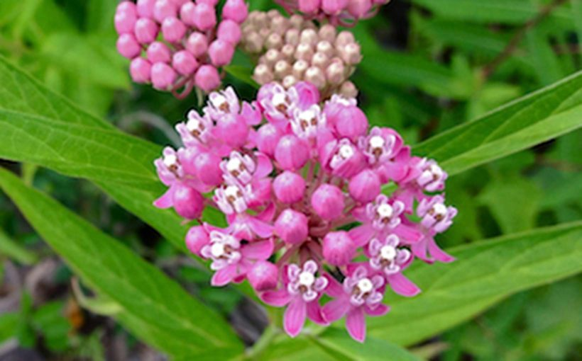 Top 5 Native Plants for Midwestern Wet Gardens
