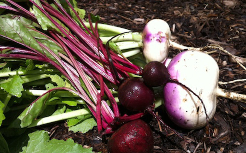 Plant Now for Fall Vegetables!