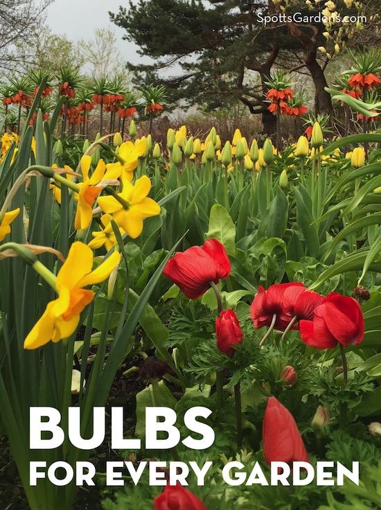 Bulbs for Every Garden