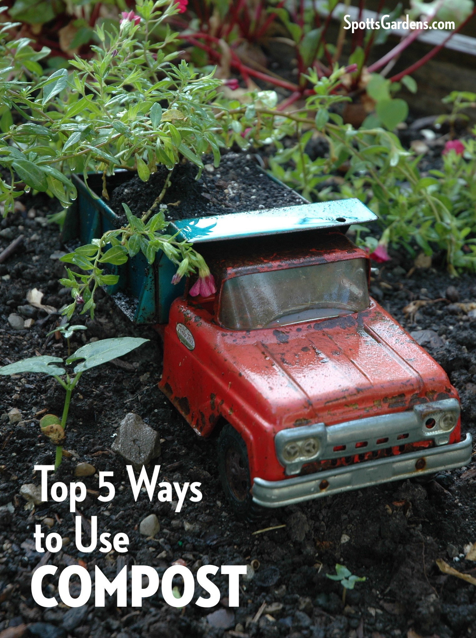 Top 5 Ways to Use Compost