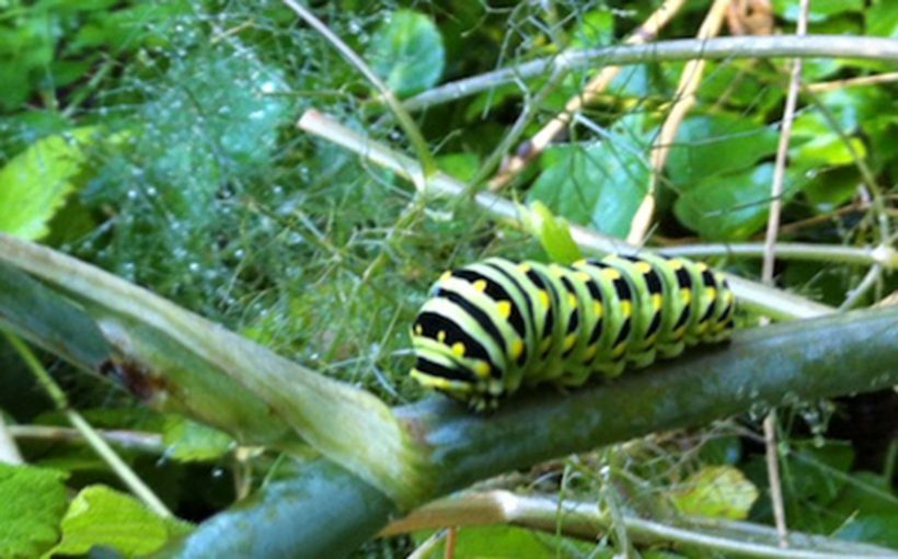 Top 5 Plants for Attracting Beneficial Insects