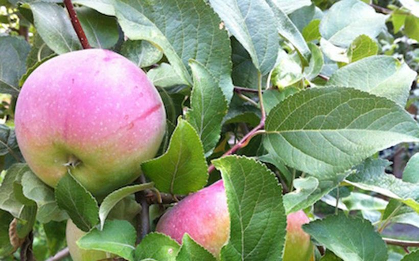 Creating a Home Orchard (Even in a Small Garden)