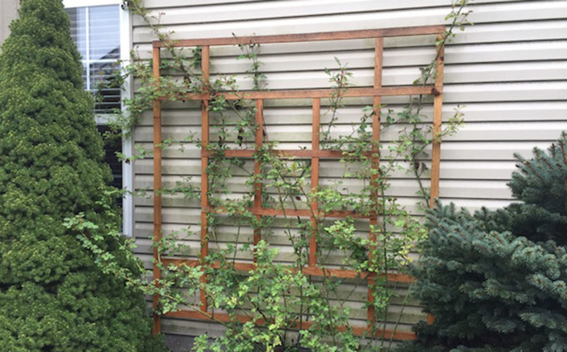 Vertical Gardening With Trellises, Arbors, and Pergolas