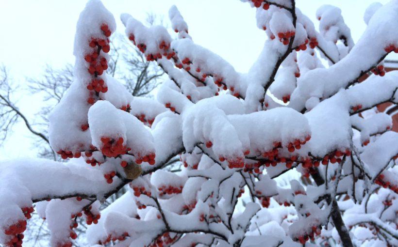 5 Ways to Create a Great Winter Garden