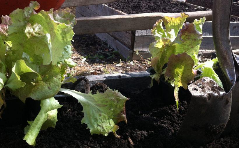Choosing Vegetable Seeds for the Organic Garden