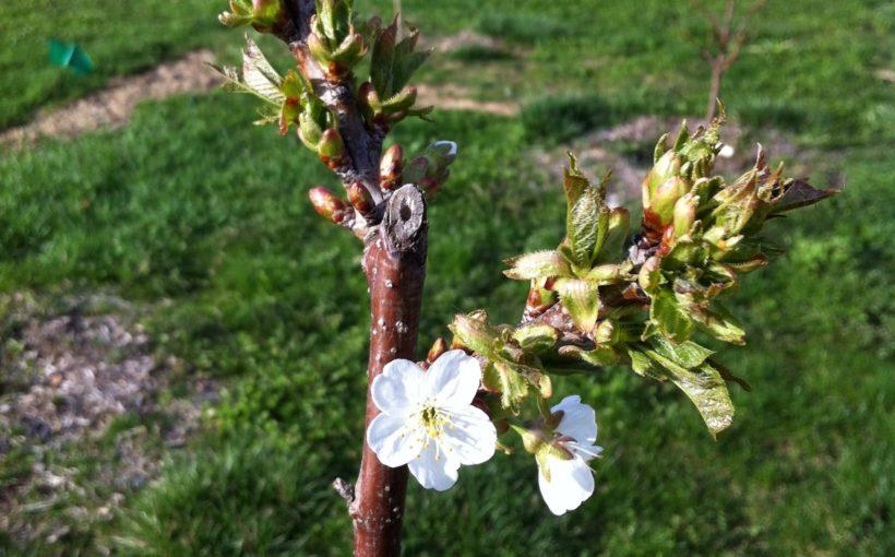 When to Prune: The Garden Pruning Calendar