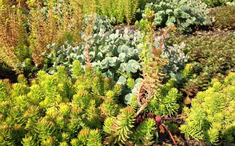 Groundcovers in the Garden