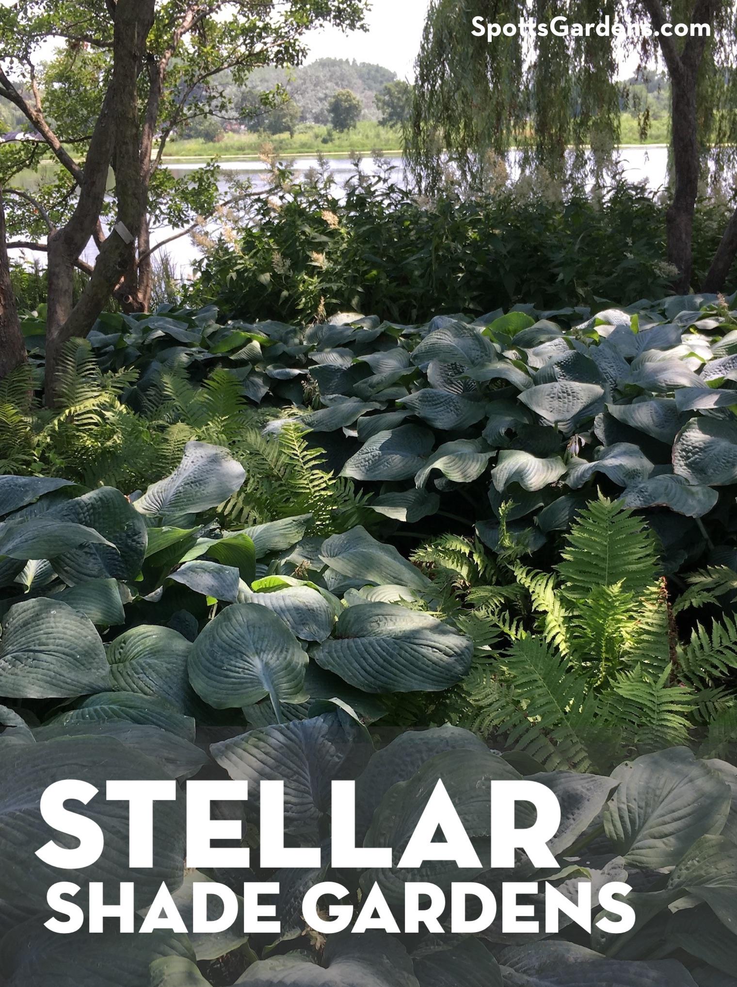 Stellar shade gardens