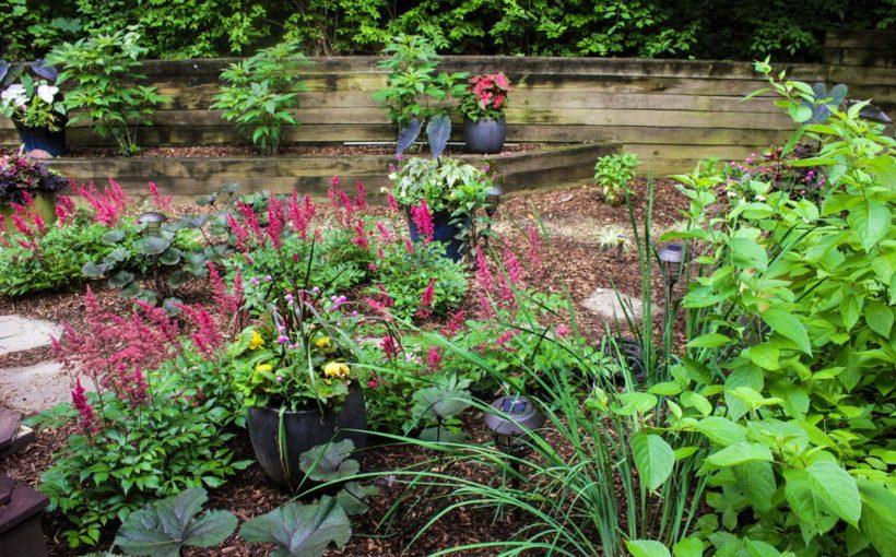 A Shady Rain Garden
