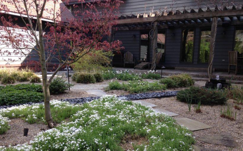 Vertical Gardening Using Trellises and More
