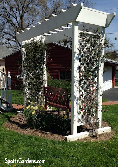 White wood arbor with vines growing on its sides