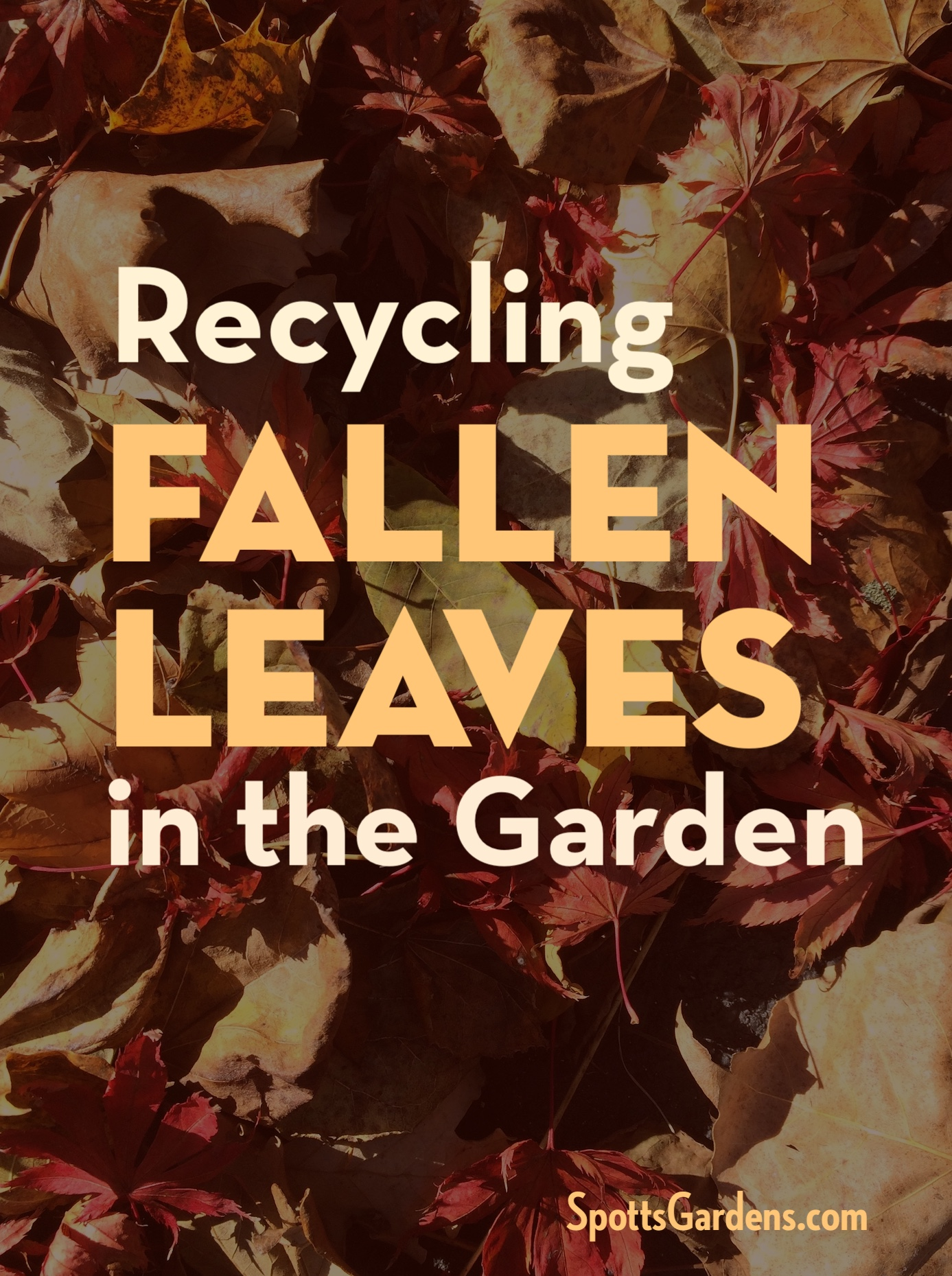 Recycling fallen leaves in the garden