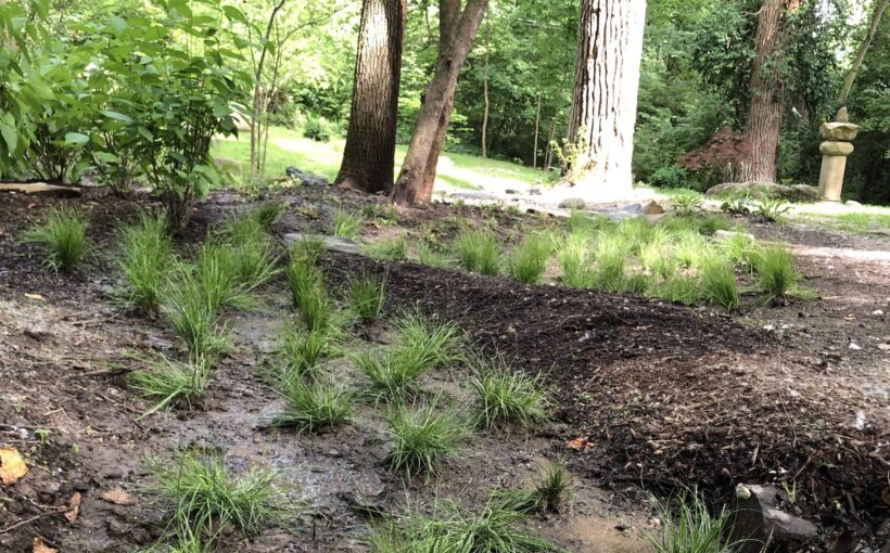 Rainscaping the Garden: Managing Rainwater with Sustainable Solutions