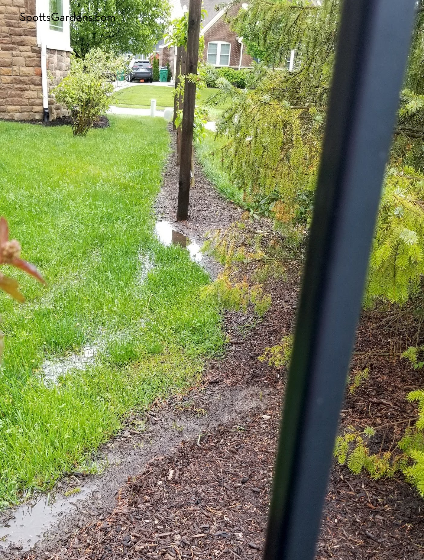Rainwater pooling on lawn