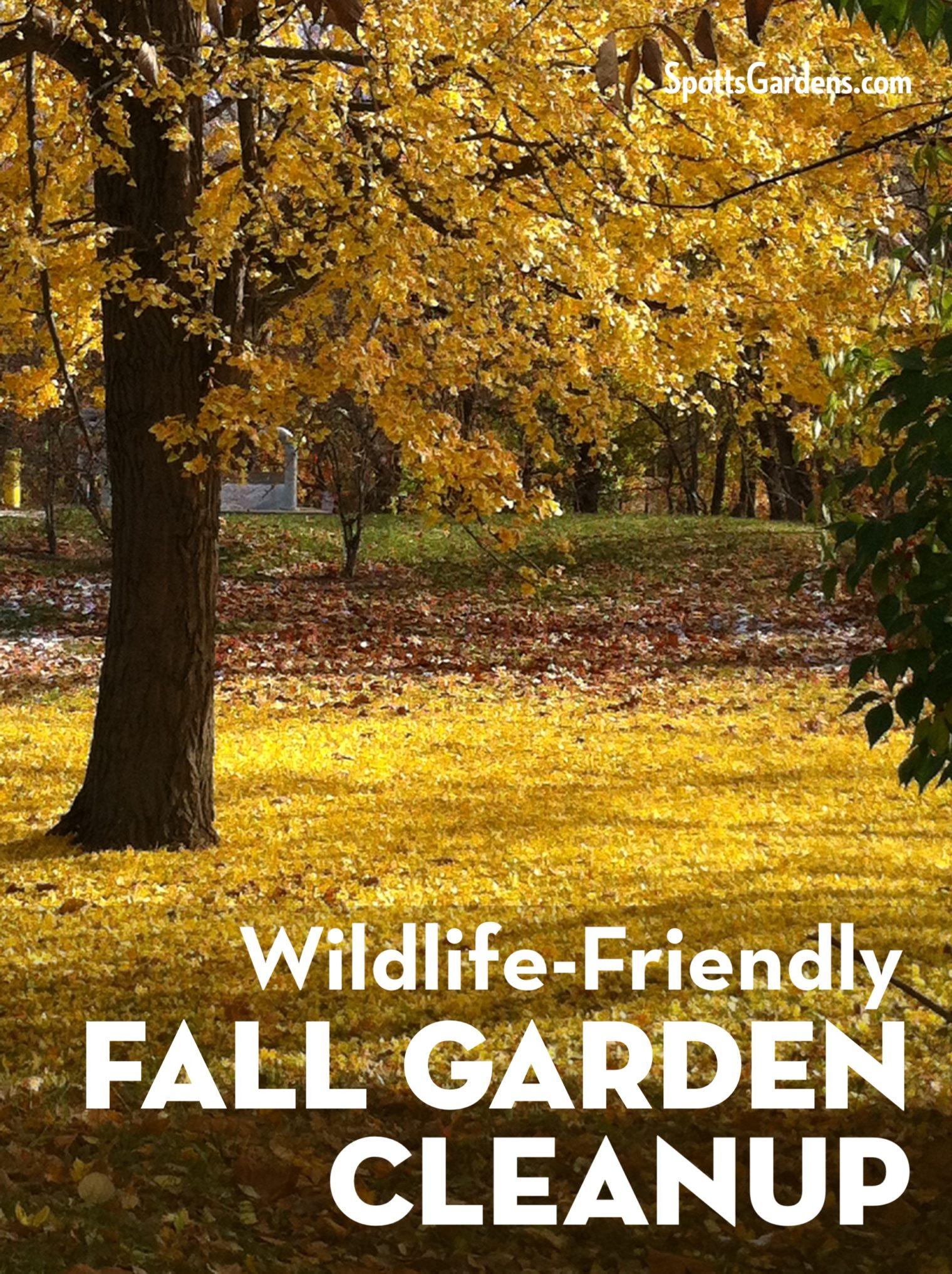 Wildlife-Friendly Fall Garden Cleanup