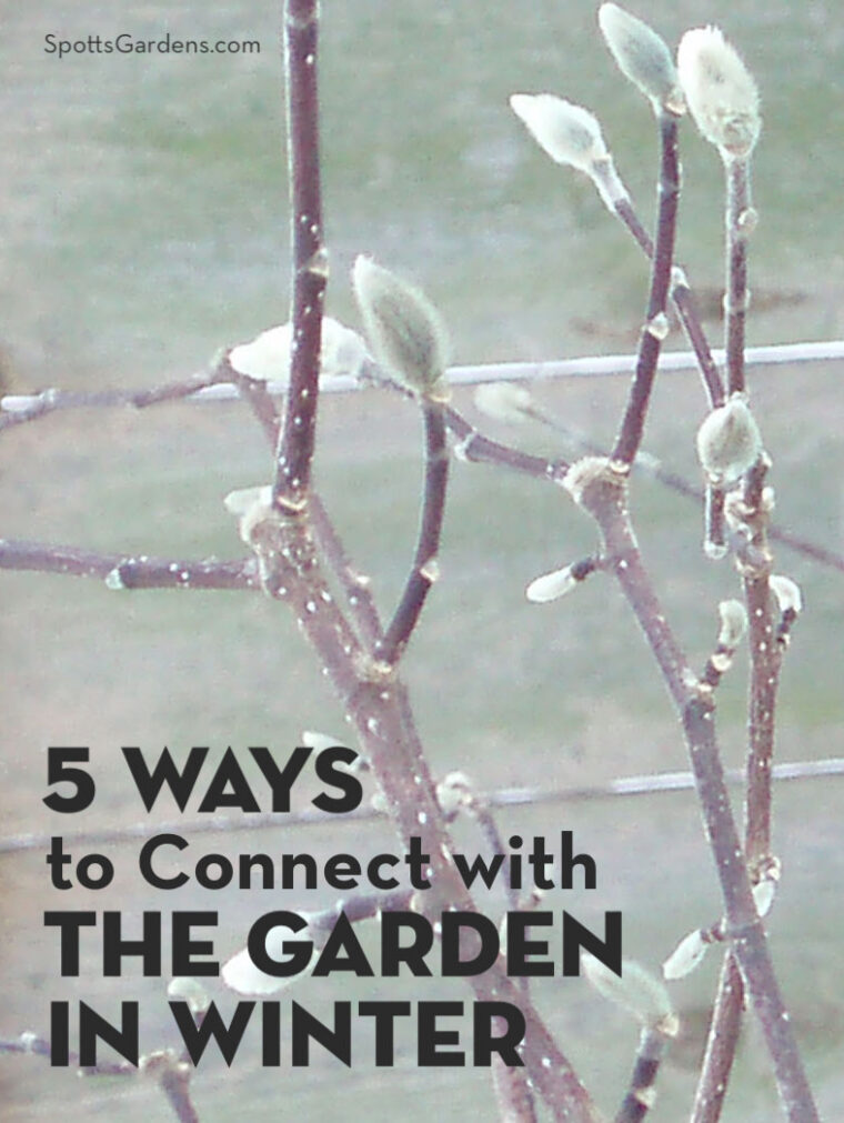 5 Ways to Connect with the Garden in Winter