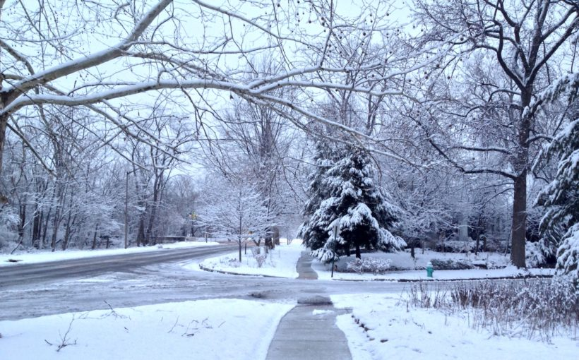 January in the Midwestern Garden