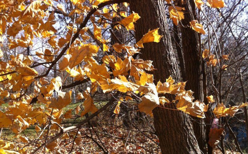 In the Zone 6 November Garden