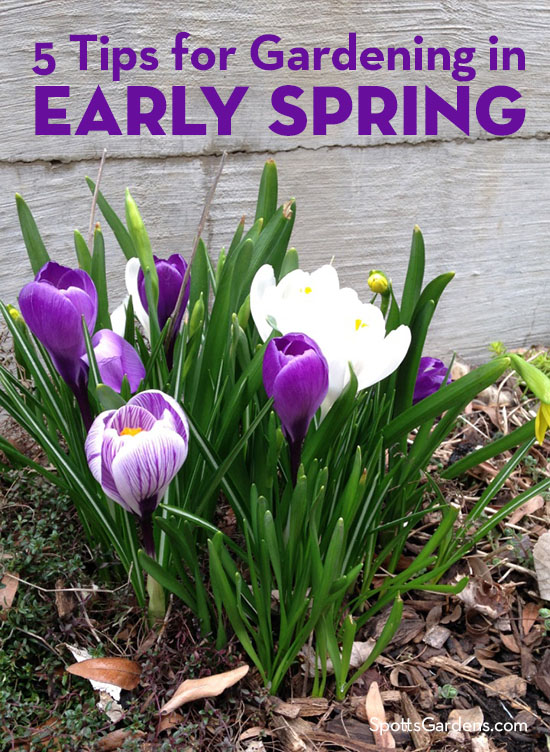 5 Tips for Gardening in Early Spring