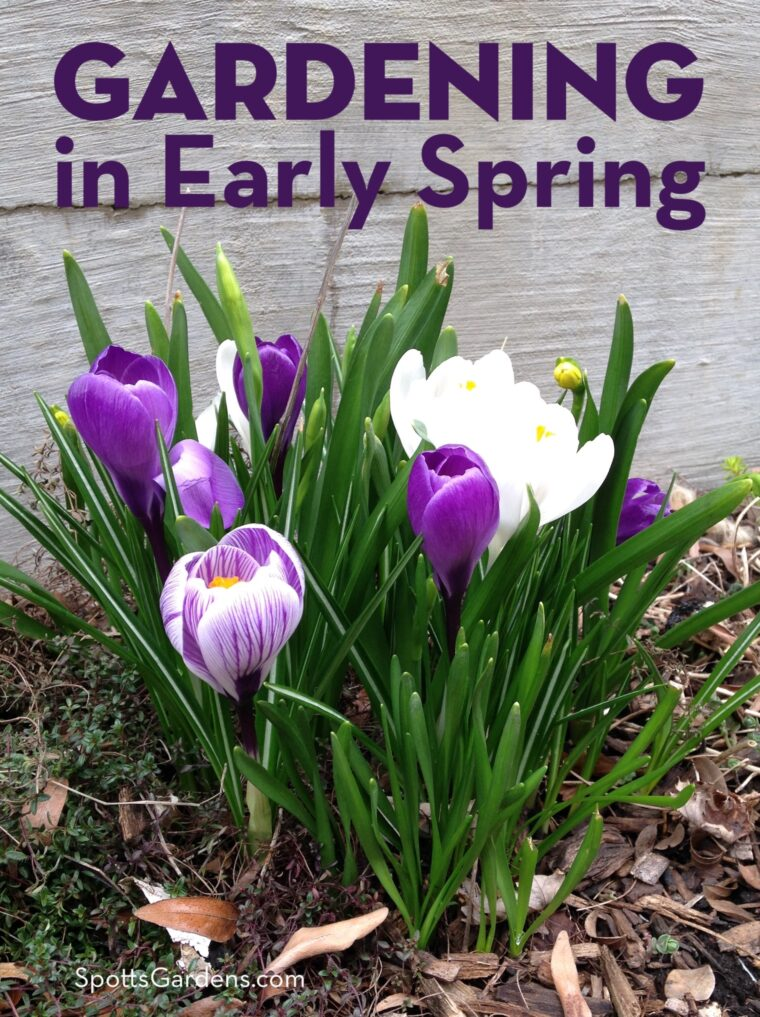 Gardening in Early Spring