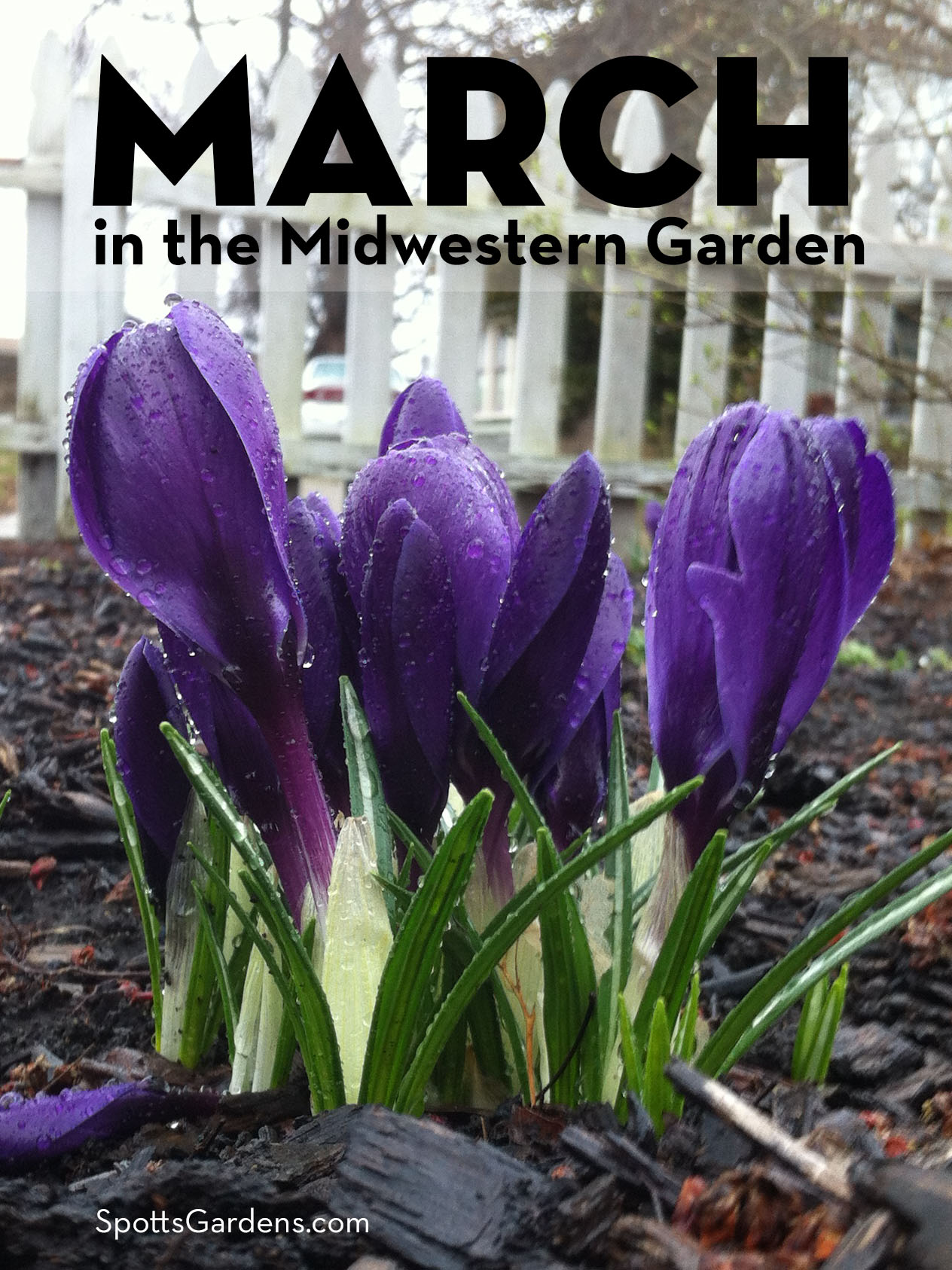 March in the Midwestern garden