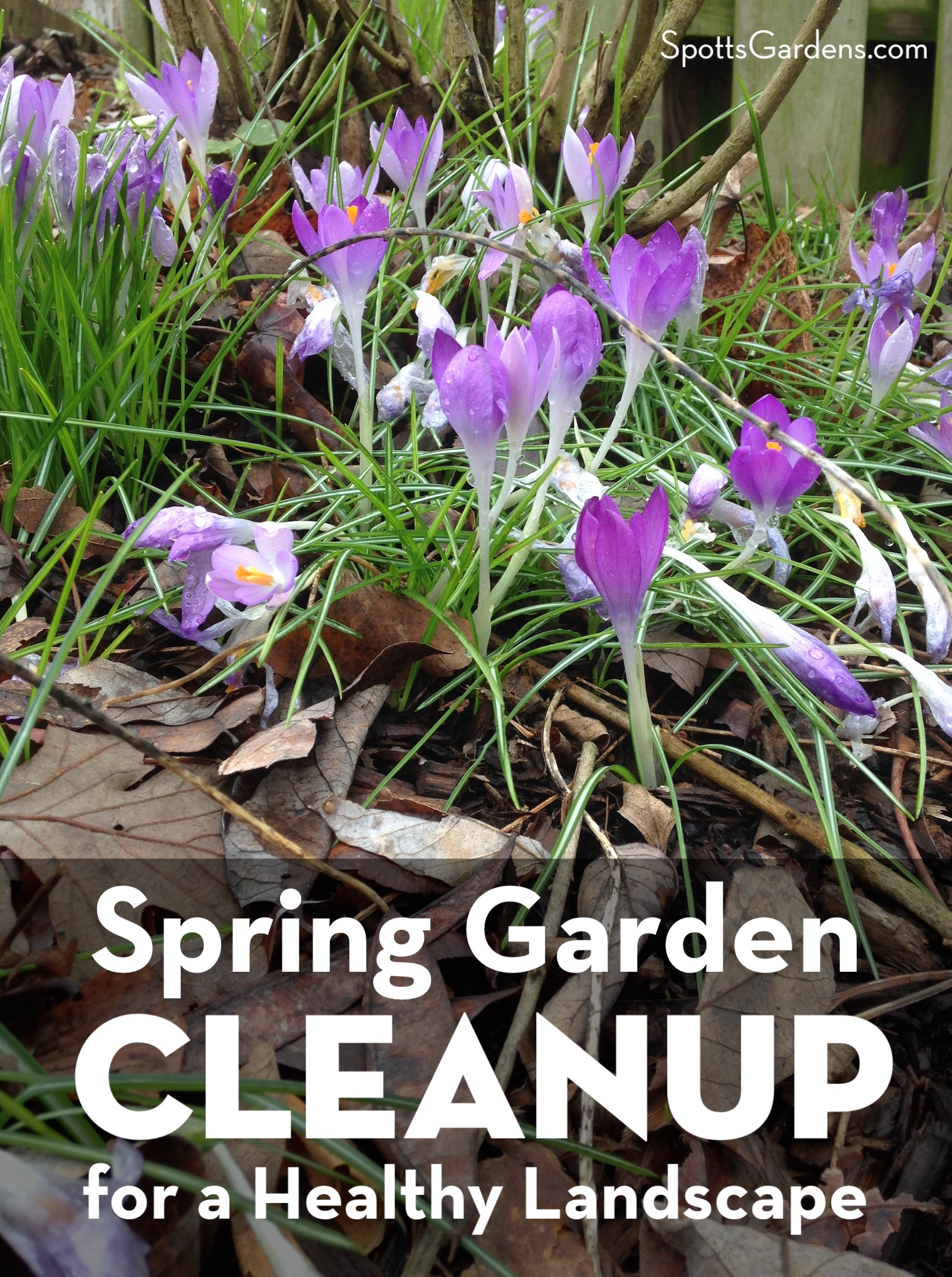 Spring Garden Cleanup for a Healthy Landscape