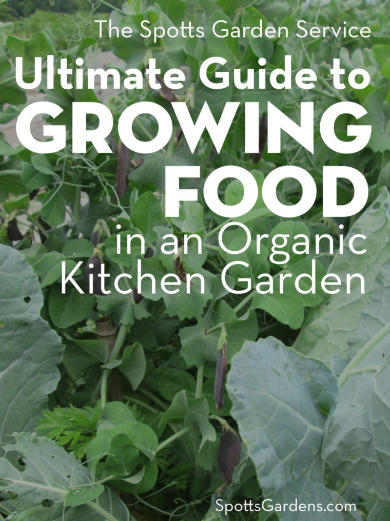Spotts Garden Service Ultimate Guide to Growing Food in an Organic Kitchen Garden