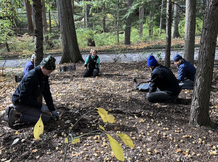 Spotts crew planting bulbs