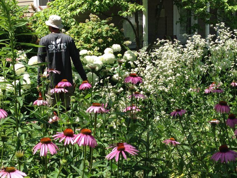 Gardener in flowers