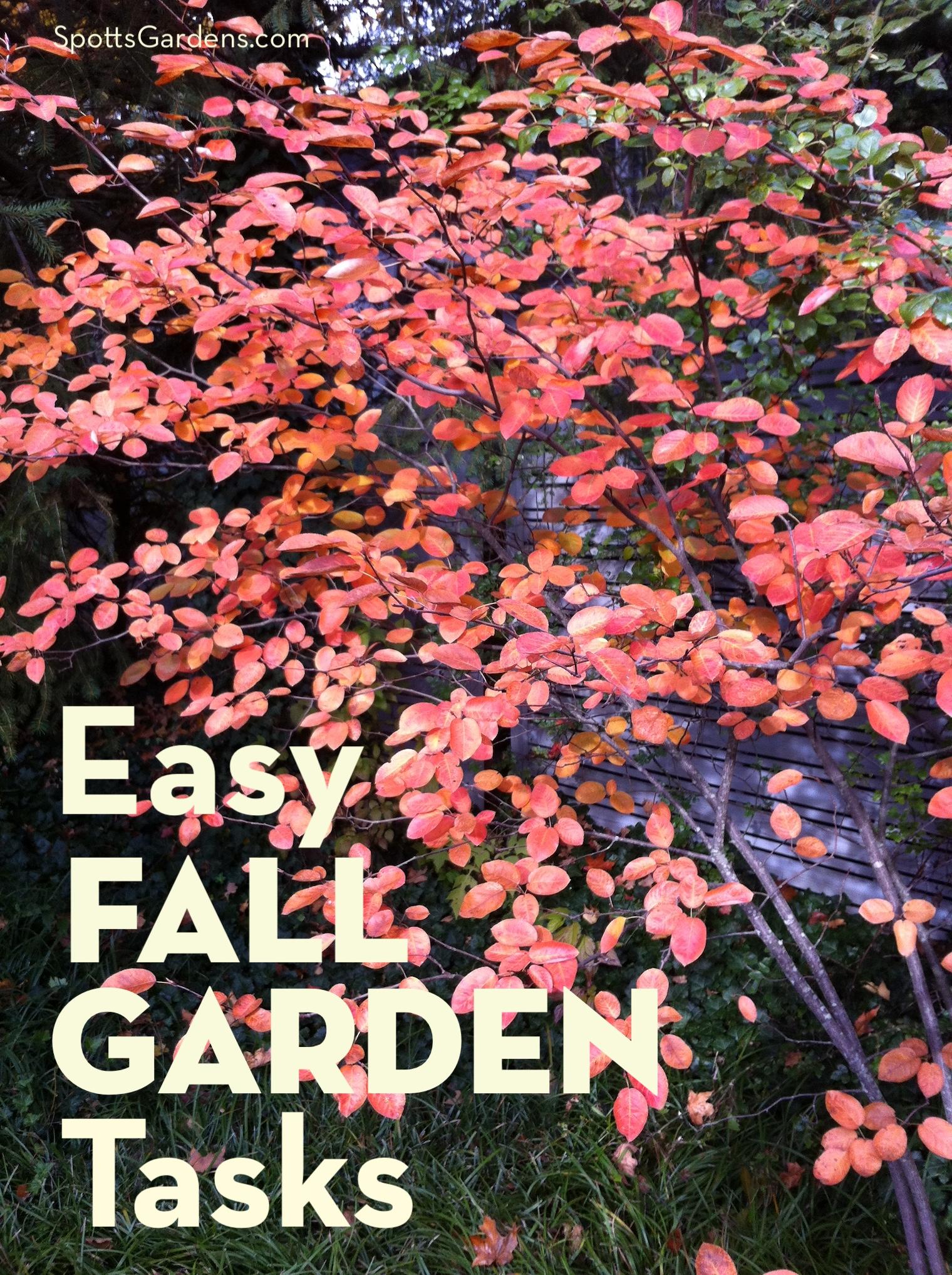 Easy fall garden tasks