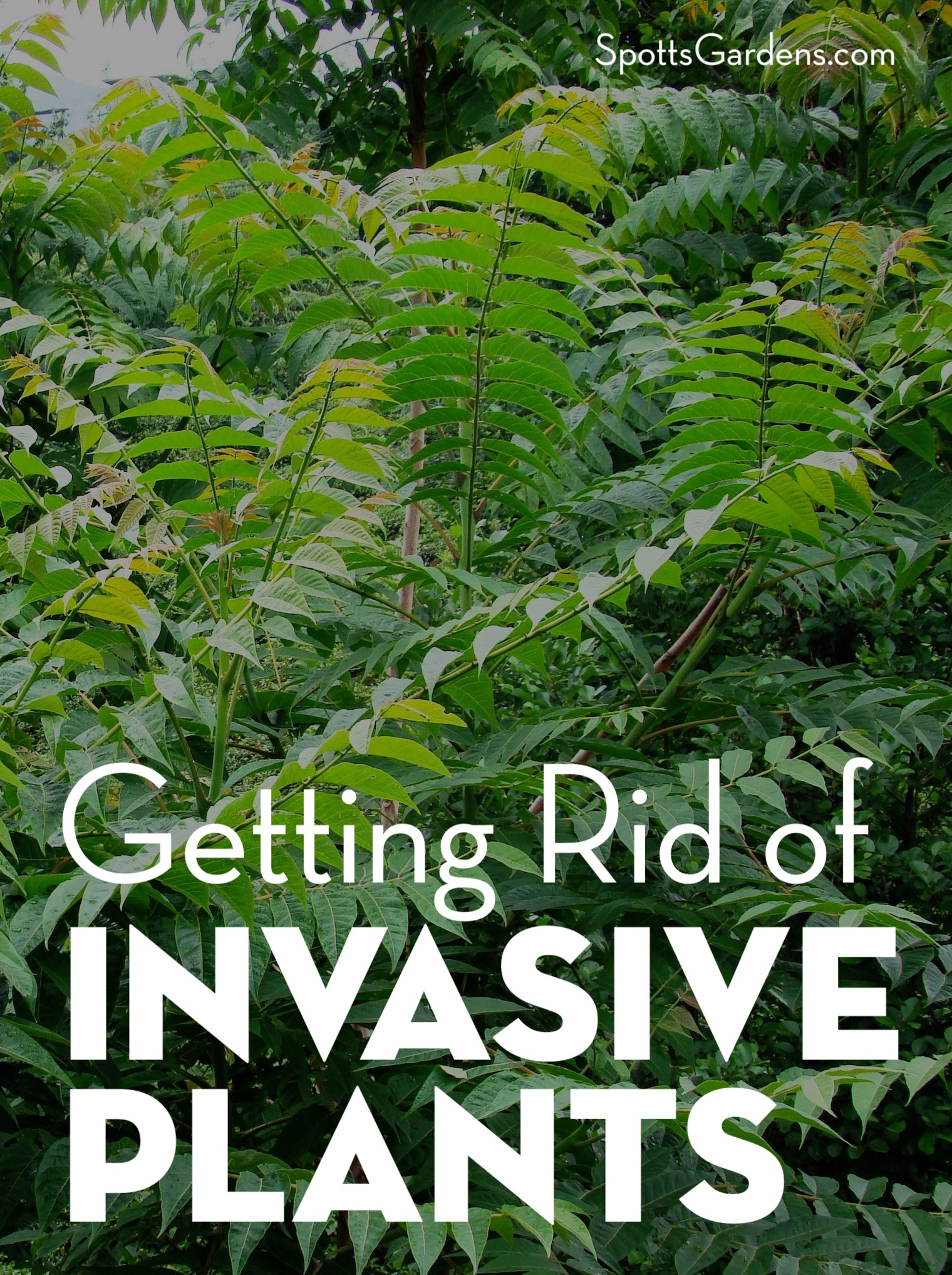 Getting Rid of Invasive Plants