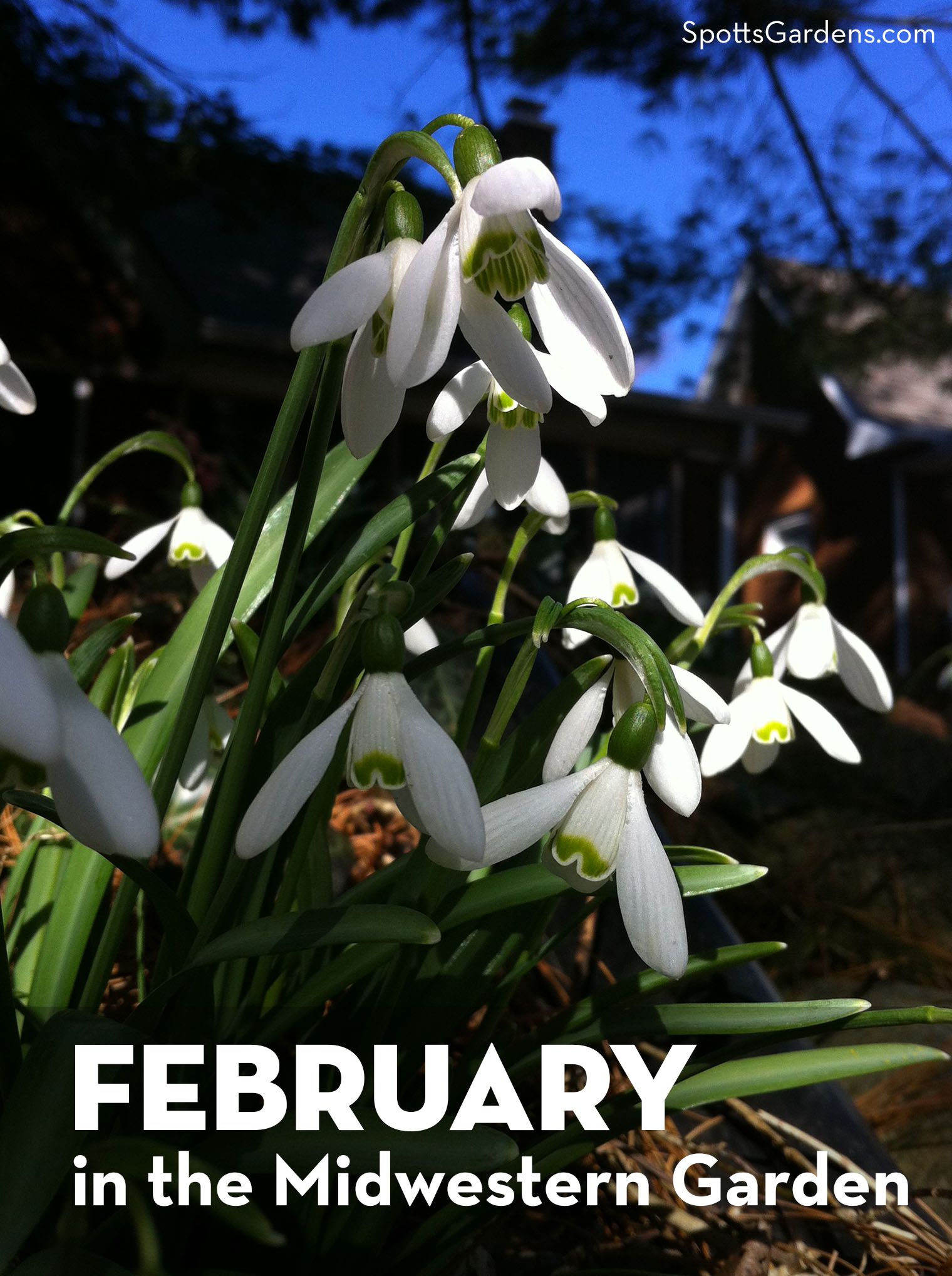 February in the Midwestern Garden