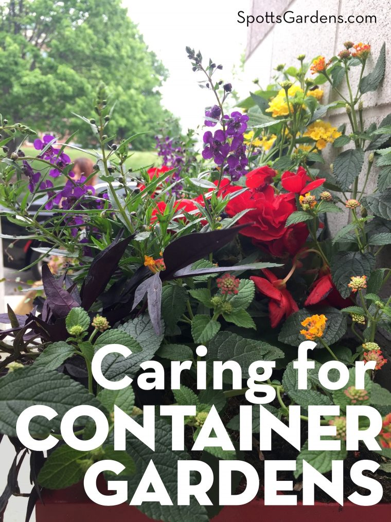 Caring for Container Gardens