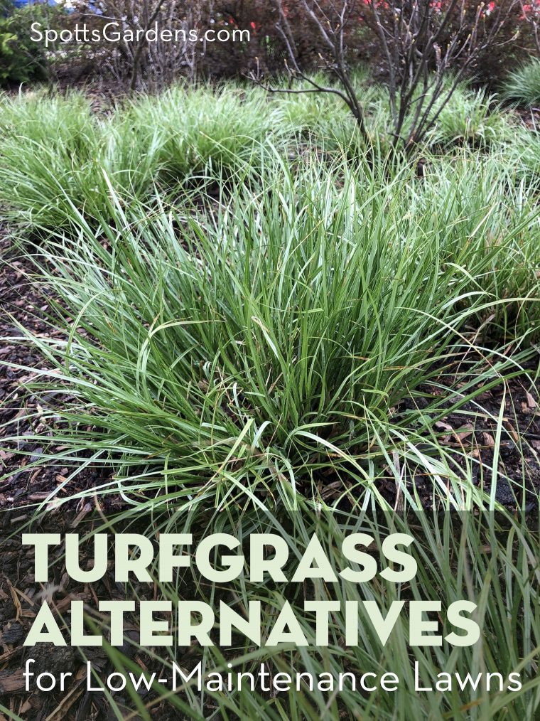 Turfgrass alternatives for low-maintenance lawns