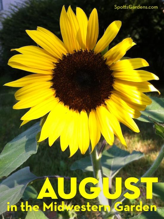 August in the Midwestern Garden
