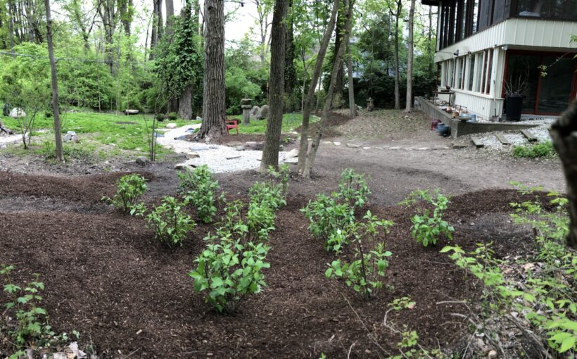 Managing Water with Rain Gardens and Bioswales