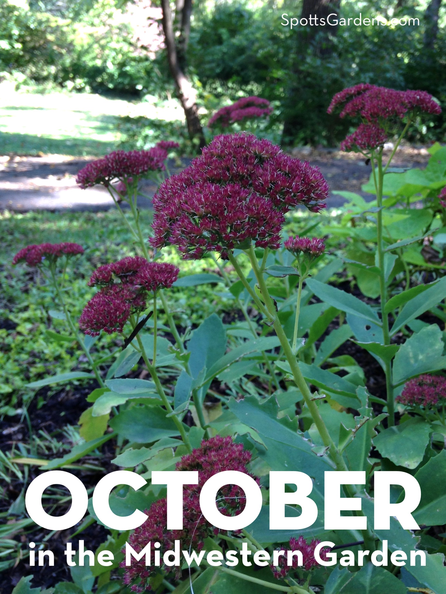 October in the Midwestern Garden