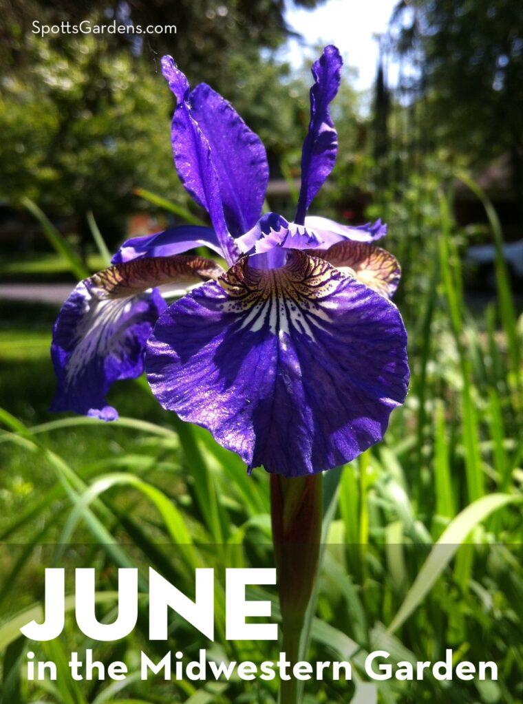 June in the Midwestern Garden