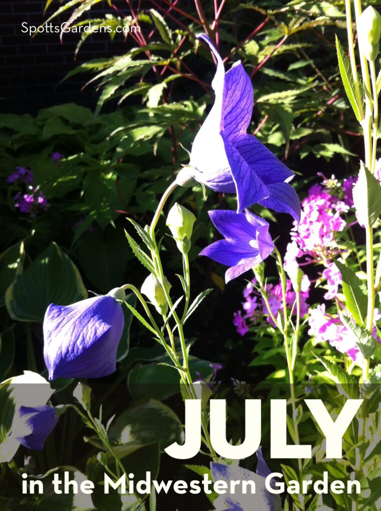 July in the Midwestern Garden