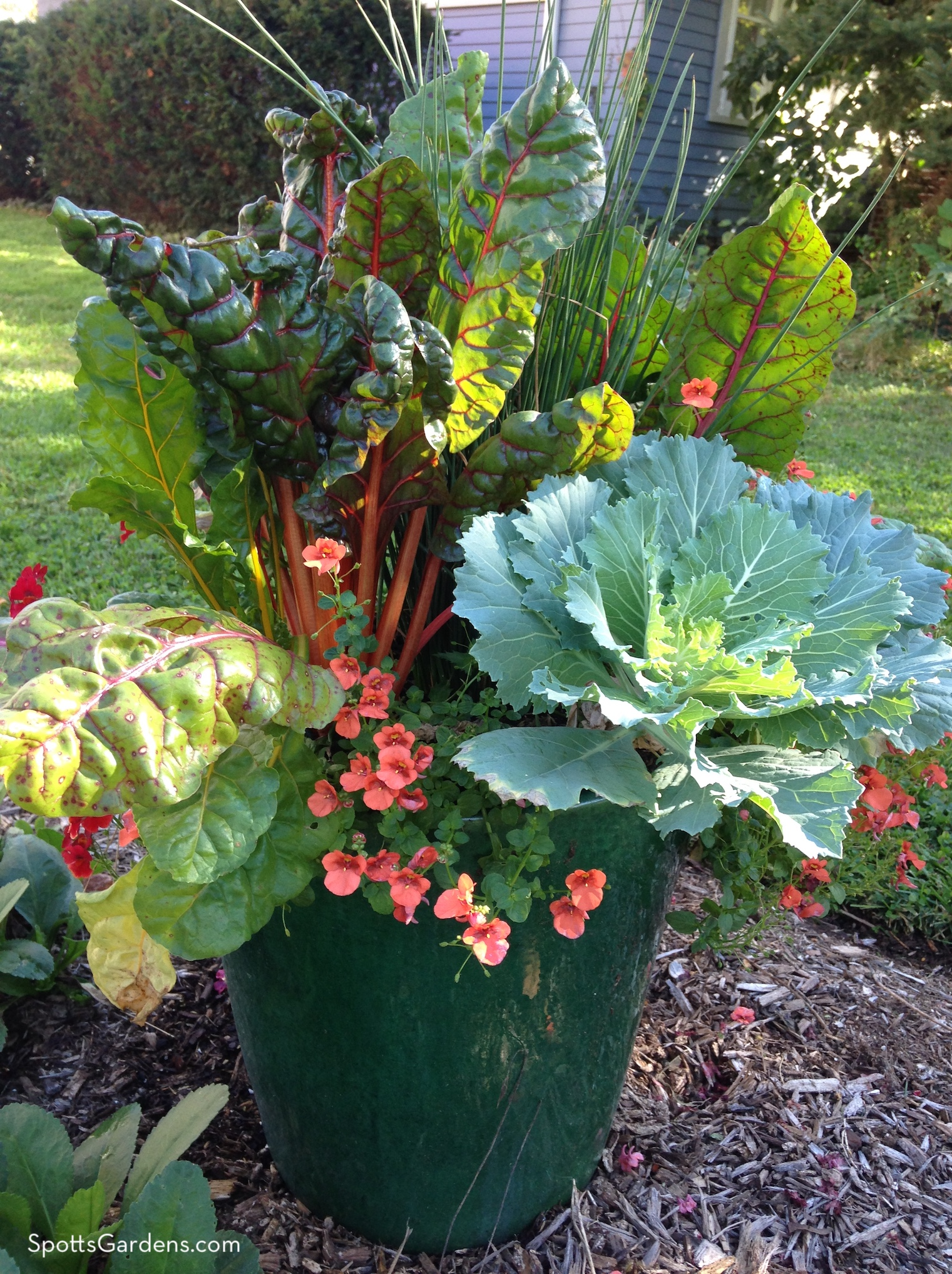 Fall container with chard