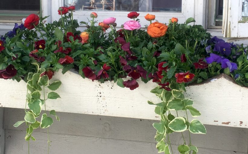 Spring Containers That Handle the Cold