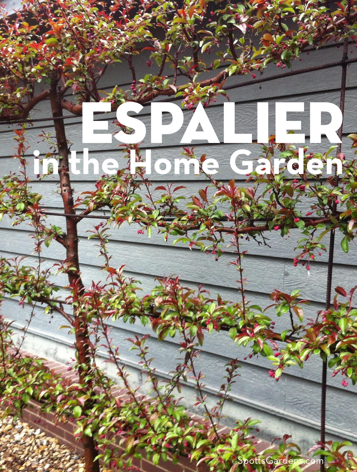 Espalier in the Home Garden