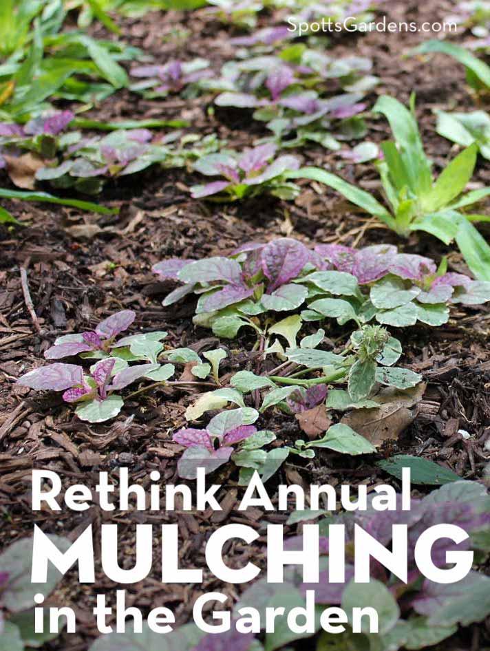 Rethink annual mulching in the garden